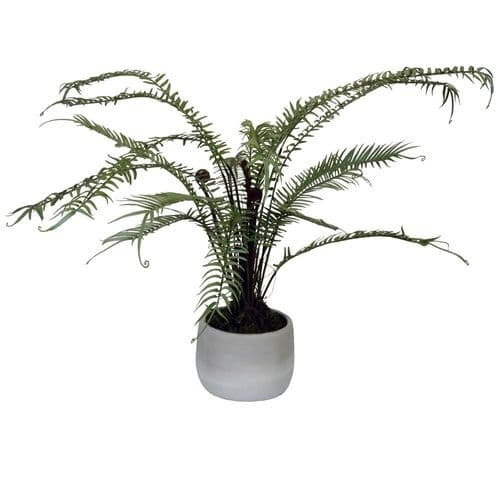 Potted Fern 19951