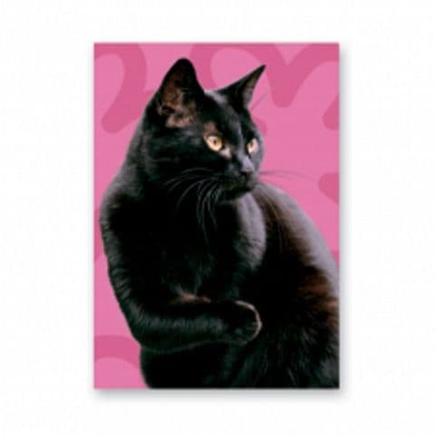 Black Cat card with pink background