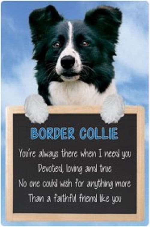 Border Collie  3D home hang up sign