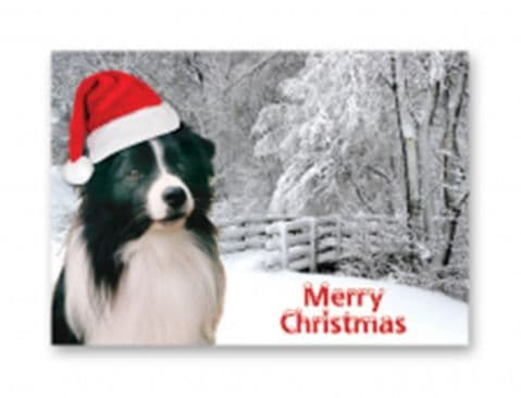 Border Collie Christmas card one card or a pack of five