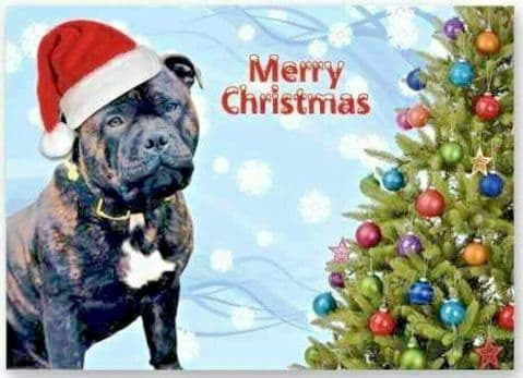 BRINDLE STAFFIE STAFFORDSHIRE TERRIER CHRISTMAS CARD DOG IN HAT WITH XMAS TREE