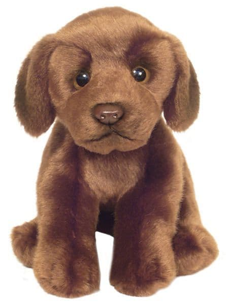 Chocolate Labrador, gift wrapped or not with or not engraved tag cuddly toy dog
