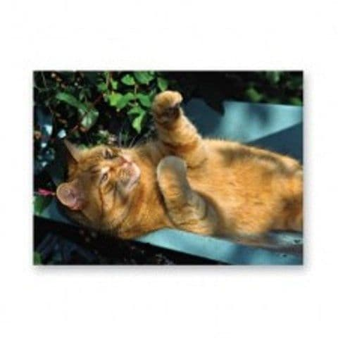 Ginger Cat laying on back playing