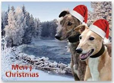 GREYHOUND 2 in hat CHRISTMAS CARD pack of 5