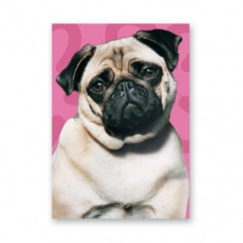 Pug with pink background card