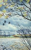 1960s Mallards Flying Over Snow Covered Lake Ladybird Book Postcard