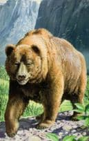 1970s Grizzly Bear Painting Ladybird Childrens Book Postcard