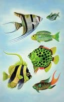 1970s Tropical Fish Aquarium Painting Ladybird Childrens Book Postcard