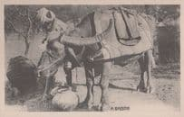A Bhistie Mounted Clothed Indian Elephant Antique Postcard