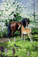 A Mare Horse & Foal Family 1960s Ladybird Book Childrens Postcard