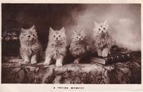A Trying Moment Baby Cats Kitten On Library Books Antique Real Photo Postcard
