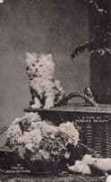 A Type Of Persian Beauty Kitten Cat Real Photo Old Postcard