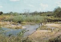 African Plantation Washday South Africa Postcard