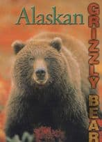Alaska Alaskan Grizzly Bear at Denali National Wildlife Zoo Park USA Postcard
