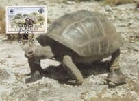 Aldabra Giant Tortoise Seychelles Stunning WWF Stamp First Day Cover Postcard