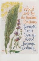 Ancient Woad Hyssop Tea Cordial Romany Natural Remedy Song Songcard Postcard