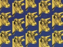 Andy Warhol Blue On Yellow Cow Wallpaper Painting Postcard