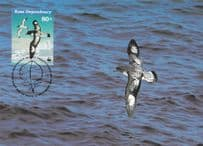 Antarctic Cape Petrel Bird WWF Stamp First Day Cover Postcard