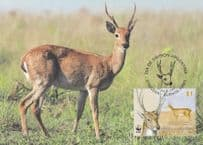 Argentinian Pampas Deer WWF Stamp First Day Cover Postcard