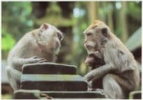 Baby Monkees Courting Baboon Chimpanzee German Love Postcard