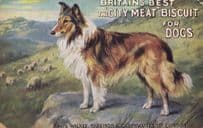 Britains Best Biscuit For Foxhounds Hunting Dogs Old Advertising Postcard