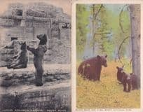 Brown & Black Bear London Zoological & USA 2x Old Postcard s