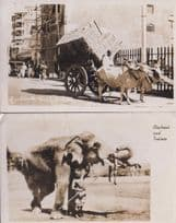 Bullock East Bombay Elephant & Trainer 2x Indian Real Photo Postcard s