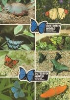 Butterfly World Isle Of Wight Eight Rare Views 2x Postcard s