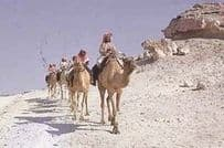 Camel Caravan Riding Arabian 1980s Rare Photo Postcard