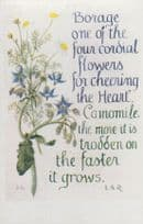 Camomile Borage Cordial Flowers Heart Natural Remedy Song Songcard Postcard