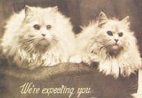 Cat Cats We're Expecting You White Fluffy 1909 Repro Animal Postcard