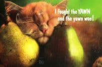 Cat I Fought The Yawn Yawning Law Punk Parody Song Fruit Pears Sleeping Postcard