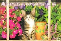 Cat My Thoughts Bring Me Closer To You Mes Pensees Me Rapprochent Postcard