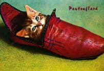 Cat Stuck Trapped In French Dutch Slipper Shoe Leather Clog Clogs Postcard