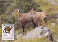 Chamois Deer Albenia FDC WWF Stamp First Day Cover Postcard