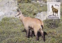 Chamois Deer Albenia Rare WWF Stamp First Day Cover Postcard