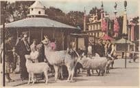 Childrens Zoo Festival Gardens London Old News Chronicle Postcard