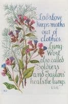 Clothes Moths Wort Soldiers Sailors Romany Military Remedy Songcard Postcard