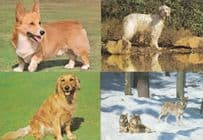 Cocker Spaniel Irish Setter Dog Corgi Puppy Wolf Parliament 4x Postcard s