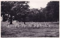 Deer at Swinton Park Zoo Lancashire Real Photo Old Postcard