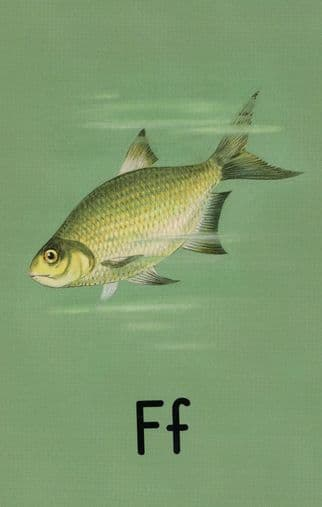 F is for Fish Ladybird Vintage Old Childrens Book Postcard