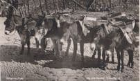 Farmer With Horse Riding Fence Twelve O Clock Lunch Antique Real Photo Postcard