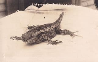 Giant Reptile Lizard Bed Antique Scary Animal WW1 Postcard