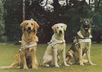 Guide Dogs For The Blind Early 1980s Postcard