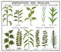 Leaf Layouts Lilas Giroflee Acacia French Old School Plants Lesson Postcard