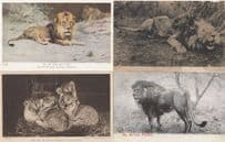 Lion Lions Family Of Subs African Monarch 4x Old Postcard s