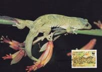 Lord Howe Norfolk Island Gecko WWF Stamp First Day Cover Postcard