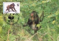 Mandrill Baboon Ape Republica De Guinea Stamp First Day Cover Postcard