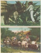 Mexican Cattle Farming Transportation 2x Old Postcard s