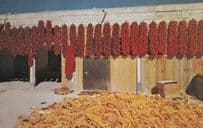 Mexican Chili & Corn Growing Con Carne Harvest Mexico Postcard